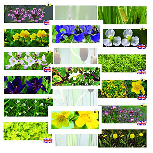 Lincolnshire Marginal Pond Plants 8 Varieties