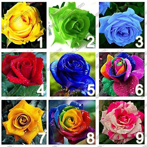 9 Farben 450 rosafarbene Samen (50 Samen je Farbe), Rosenblumensamen, Regenbogen-Rosen, DIY Bonsai