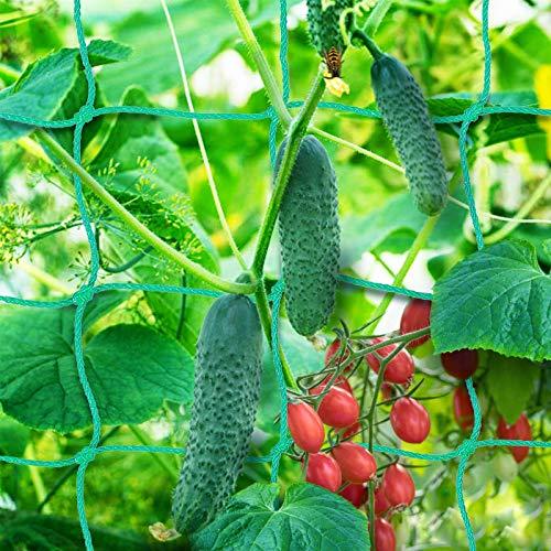 Premium Ranknetz 5 x 2m mit großer Maschenweite für den perfekten Wachstum von Tomaten, Gurken und Kletterpflanzen Das Optimale Rankhilfe Netz für Garten und Gewächshaus - Maschnweite (10cm)