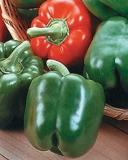 King Arthur Hybrid Pepper 25 Seed Jung003