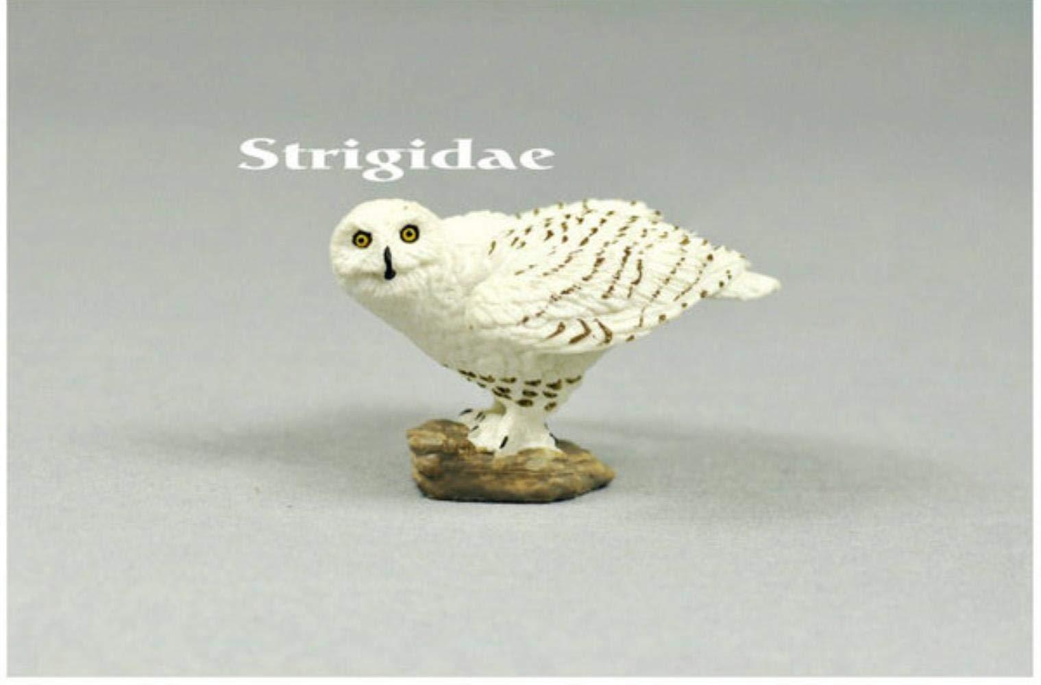 FGHHJ Figurilla Estatuas Adornos Aves Rapaces Animales Salvajes Originales Snowy Owl Figuras Coleccionables Estatuilla Niños Juguetes Educativos Snowy Owl: Amazon.es: Hogar