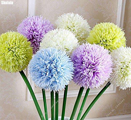 60pcs/bag rare semi di cipolla gigante Allium Multicolor Balcone Bonsai in vaso giardino ornamentale impianto per Flower Pot Fioriere