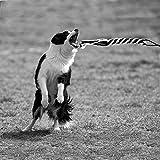 sanzang Spielzeug für Hunde ausziehbare Stange mit Seil Trainingsgerät für Haustiere - 8