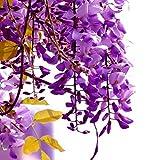 Dyyicun12 30 piezas de semillas de glicinas para el hogar, jardín, plantas trepadoras perennes