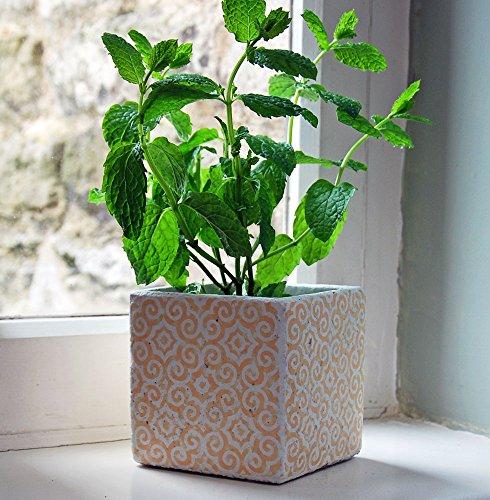 Petit carré Soho antique Orange en céramique Pot de fleurs