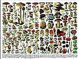 qingyuge seta-1000 Piezas niños Adultos Intelectual de descompresión Difícil y Desafiante Decoración Hogar Juguete-50cmx75cm