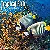 Bright Day Calendars 2021熱帯魚の壁カレンダー バイ 明るい日、12 x 12 インチ、海の下のエキゾチックな動物