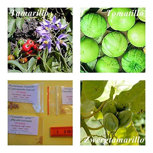 Baumtomate (Tamarillo)- 2 Arten (je 20 Samen) und 20 Samen Tomatillo
