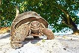 Schildkröte Reptil Natur Tier Bild XXL Wandbild Kunstdruck