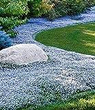 Zoom IMG-1 inkeme giardino 100pcs blue ground