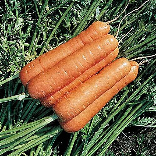 PREMIER SEEDS DIRECT - Carrot - RESISTAFLY F1-1300 Finest Seeds