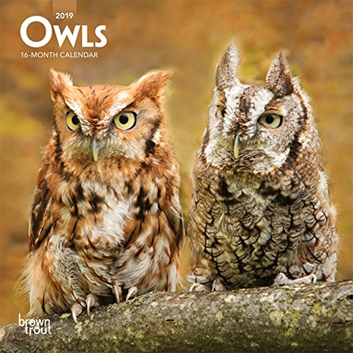 Owls 2019 7 x 7 Inch Monthly Mini Wall Calendar, Wildlife Animals Birds
