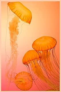 Jellyfish Notebook: Jellyfish Journal, 6