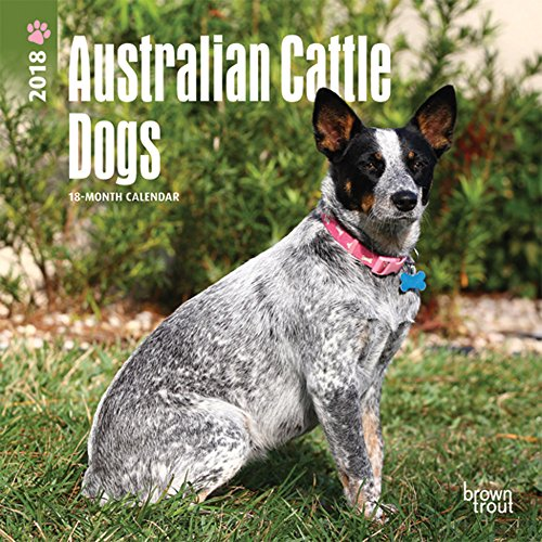 Australian Cattle Dogs 2018 7 x 7 Inch Monthly Mini Wall Calendar, Animals Dog Breeds (Multilingual Edition)