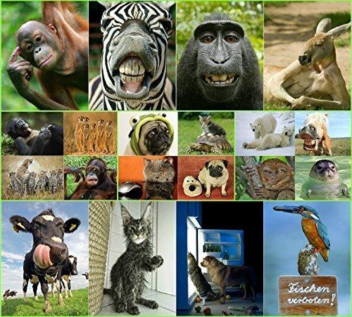 'ANIMAUX drôles III': Ensemble de 20 cartes postales avec des animaux coquins et drôles, toutes différentes cartes postales au format 14,8 x 10,5 cm de EDITION COLIBRI