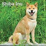 Shiba Inu 2020 - 16-Monatskalender mit freier DogDays-App: Original BrownTrout-Kalender [Mehrsprachig] [Kalender] (Wall-Kalender) - BrownTrout Publisher