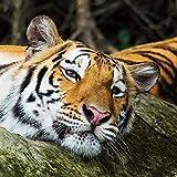 Lazodaer Kits de pintura de diamante para adultos, niños, decoración de oficina, casa regalos para ella Him Rock Tiger 30 x 30 cm