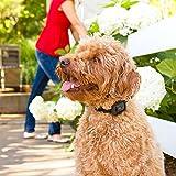 Motorola Scout Traks – GPS Tracker und Aktivitätstracker für Hunde und Katzen – Inkl. 1 Jahr Abo, schwarz - 10