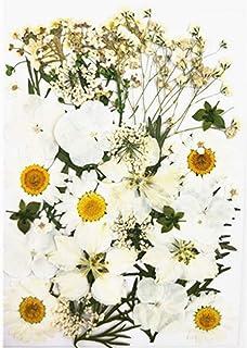 COSYOO 1 Secs Emballage Fleur DIY Creative Mode Pressée Fleur Artisanat Fleur Naturel Fleur Pressée Fleur pour Le Visage M...