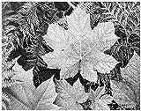 ArtDash? Ansel Adams, Studios, die Iconic Schwarz & Weiß Fotos: 8'×10' Print Blätter