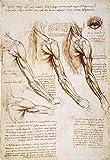 Leonardo Anatomy 1510 Npen And Ink Studies Of The Human Arm Shoulder And Neck By Leonardo Da Vinci C1510-1511 Poster Print by (18 x 24)
