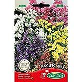 Germisem Pacific Mix Semillas de Statice 0.5 g (EC1550)