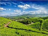 Poster 80 x 60 cm: Grüner Tee-Plantagen im Morgen von