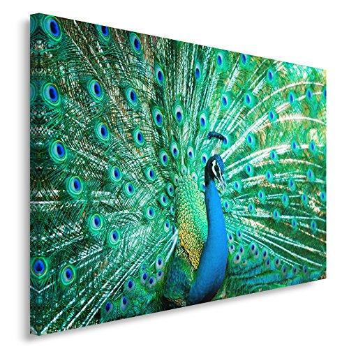 Feeby. PFAU Bild auf Leinwand Größe: 120x80 cm, 1 Teilig Leinwanbild Wandbild Kunstdrucke Wanddeko Tiere Natur BLAU
