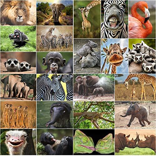 24 TIERE AUS AFRIKA Postkarten-Set (24 verschiedene Tierpostkarten) für Sammler oder Postcrossing von EDITION COLIBRI