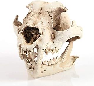 Handicraft Medicine Pendant Multi-Purpose Organ Model Required Animal Skull Model Earth Dog Skull Resin Model
