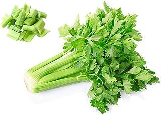Green Bunching Seeds Graines doignons 10 g Evergreen Scallions Long White Oignon Jardin L/égumes Bio Feuilles fra/îches pour planter en int/érieur ou en ext/érieur pour cuisiner Assionnement /à poisson