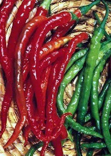 Tropica - Paprika/Chilli - De Cayenne (Capsicum annum) - 20 Samen - Chilli/Pepperoni