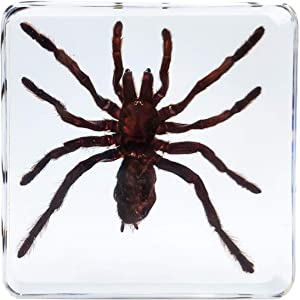 LOOYAR Real Spider Resin Insect Paperweight Desk Decoration Taxidermy Animals Biology Anatomy Educational Teaching Tool Toy Specimen for Book Office Science Education Classroom