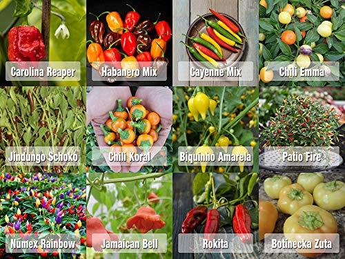 Prademir Samen Chili Set aus Portugal 12 x 100{cc43de0722ec3bbcb61e91c6258df2ad03404fc74baaf9671af8b961fe615ea9} Natur Premiumsamen saatgut alte sorten Carolina Reaper und andere Chili Samen