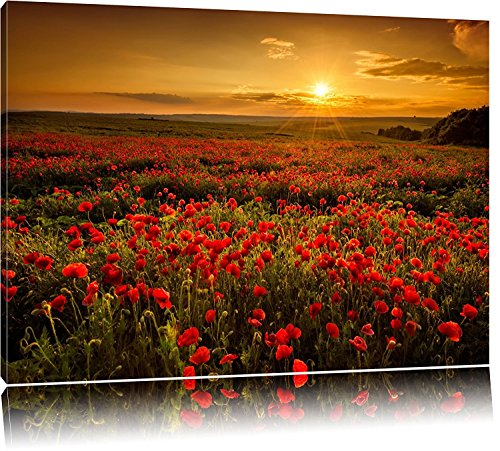 Leinwandbild Mohnblumen beim blühen bei Sonnenaufgang