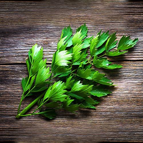 Liebstöckel/Maggi Kraut mehrjährig 250 x Samen 100% Natursamen aus Portugal handgepflückt… (Liebstöckel/Maggikraut)