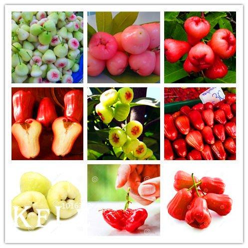 Big Sale! 100 Pcs/Sac Rose d'Apple Seeds Graines rares de fruits pour jardin Plantation Easy Grow, Wck6Sl
