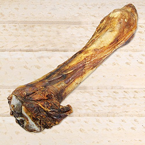 Schecker Pferdeknochen XXL - Länge ca. 35 cm - große schwere Beinknochen vom Pferd - zum Knabbern für empfindliche allergische Hunde