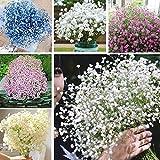 edqz - semi di fiori in primavera, 200 pezzi, mini semi di gipsofila, romantico cielo stellato, bonsai per casa, giardino, cortile, balcone semi di gypsophila