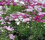 XINDUO Fleurs Sauvages en mélange Graines,Semis de Verdure combinés Quatre Saisons pour Le Jardinage des graines de verdissement-Tolérant au sel,Graines De Printemps Vivaces