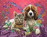 Kits de chat couleur peinture à l'huile par numéros Figure peinture acrylique dessin sur toile peint à la main pour adultes enfants ensemble décor à la maison A1 60x75 cm