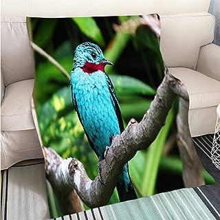 BEICICI Art Design Photos Cool Quilt Spangled Cotinga Blue Bird Cotinga cayana Hypoallergenic - Plush Microfiber Fill - Machine Washable