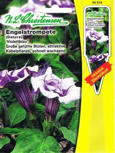 Engelstrompete 'Violettblau' violettblau, große gefüllte Blüten, attraktive Kübelpflanze Staude ( mit Stecketikett) ' Datura' 'Brugmansia suaveolens'