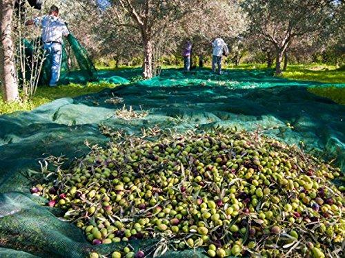 MAILLESTORE Filet de récolte Pantalon Vert 6m x 8m