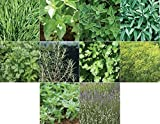 David's Garden Seeds Collection Set Herb Culinary (Multi) 10 Varieties...