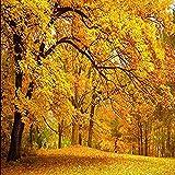 Papel tapiz fotográfico Otoño dorado Piso dorado de Montreal Golden Fall TV Sofá Sala de estar Papel Pared Pintado Papel tapiz 3D Decoración dormitorio Fotomural sala sofá pared mural-350cm×256cm