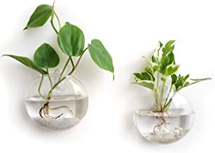 Mkono 2 Pack Wall Hanging Glass Terrariums Planter Flower Vase for Hydroponics Plants, Home Office Living Room Decor, Oblate
