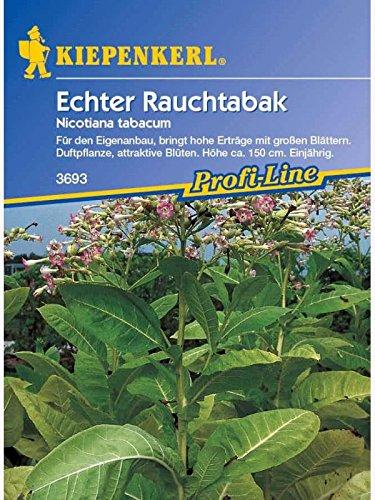 Nicotiana tabacum Echter Rauchtabak