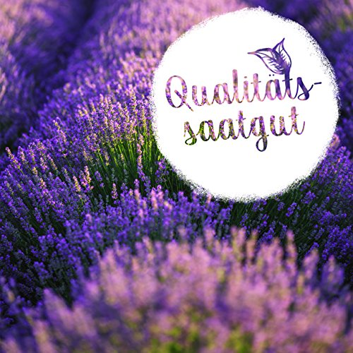 LAVODIA Lavendel Samen mehrjährig winterhart Premium Saatgut für ca. 100 Lavendel Pflanzen (250 Lavendelsamen) - 2