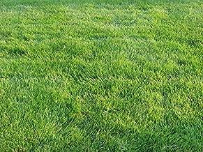 Zoysia Grass Seeds-Zoysia Emerald Grass-1/8 lb